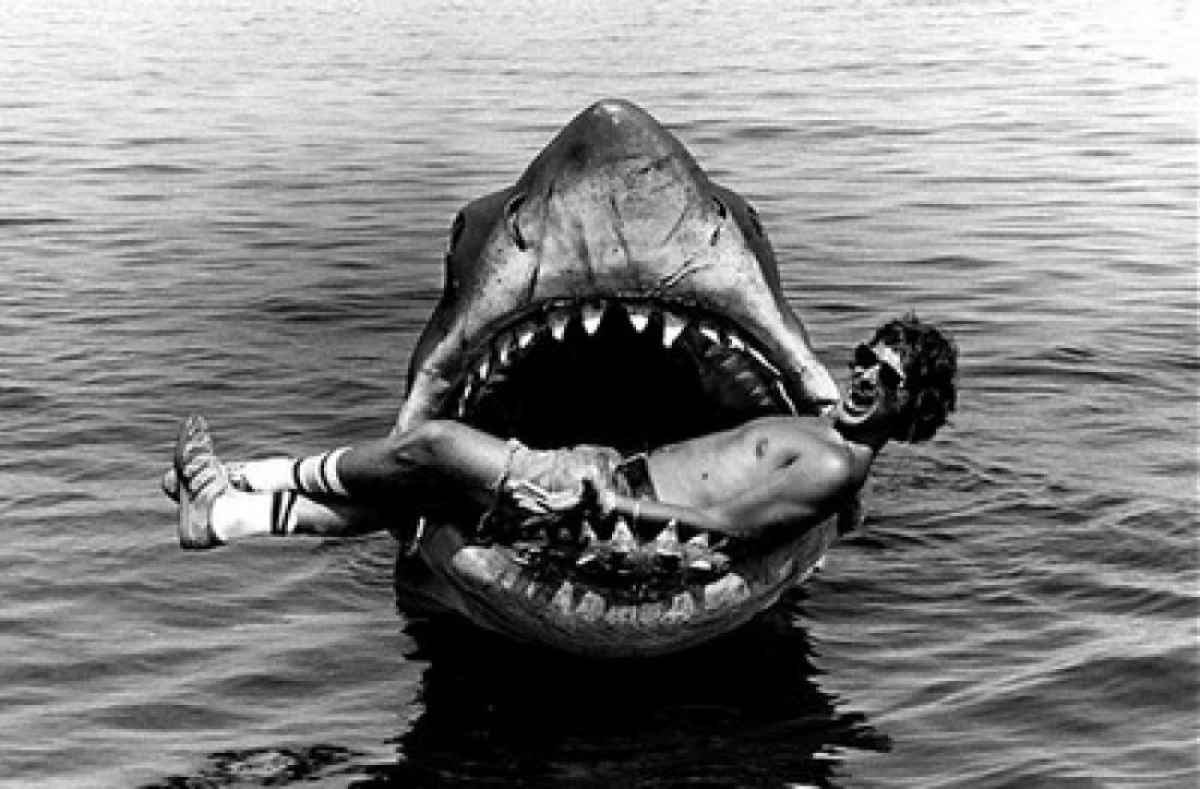 Акула и ее обед. Счастье