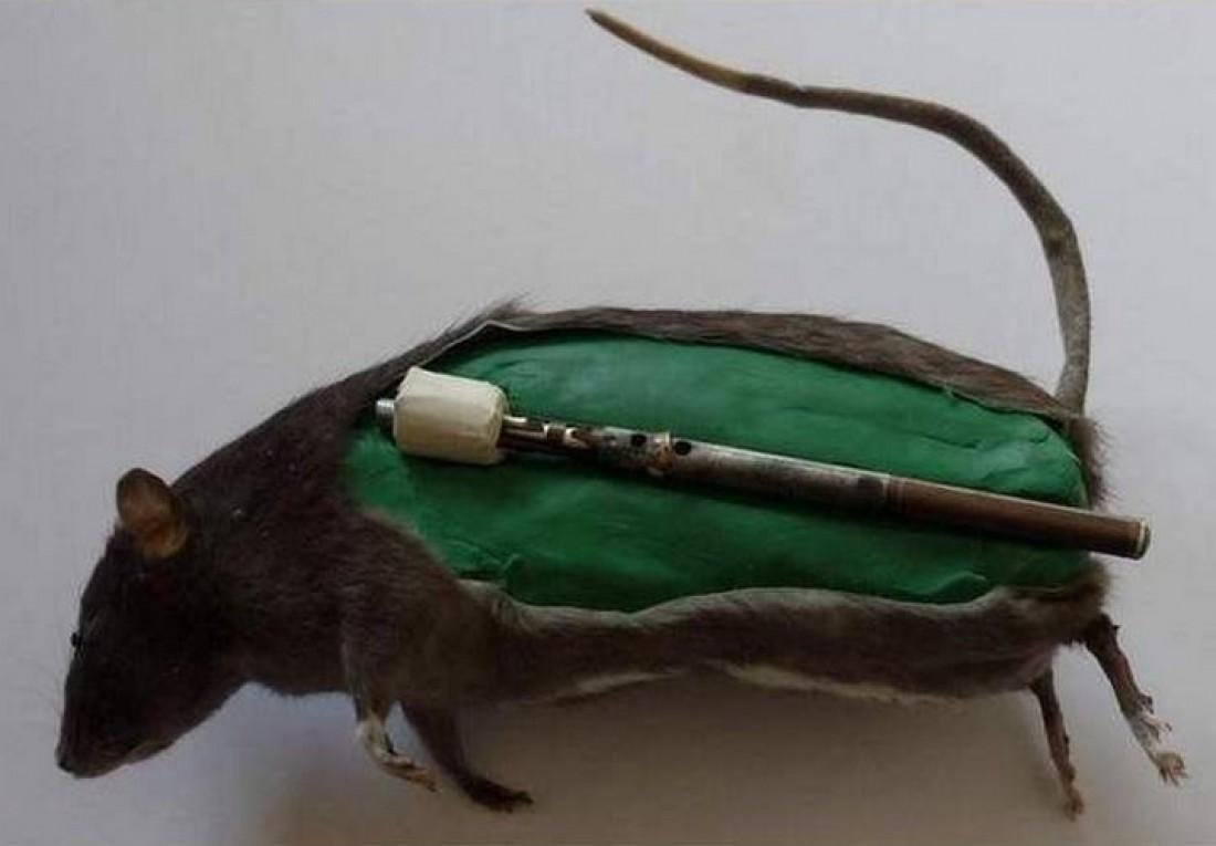 Во Второй мировой воевали даже крысы