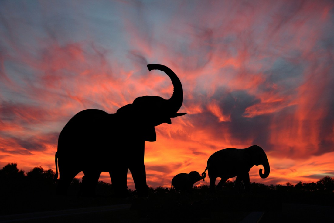 Слон. Боится грызуна, которого может превратить в лепешку