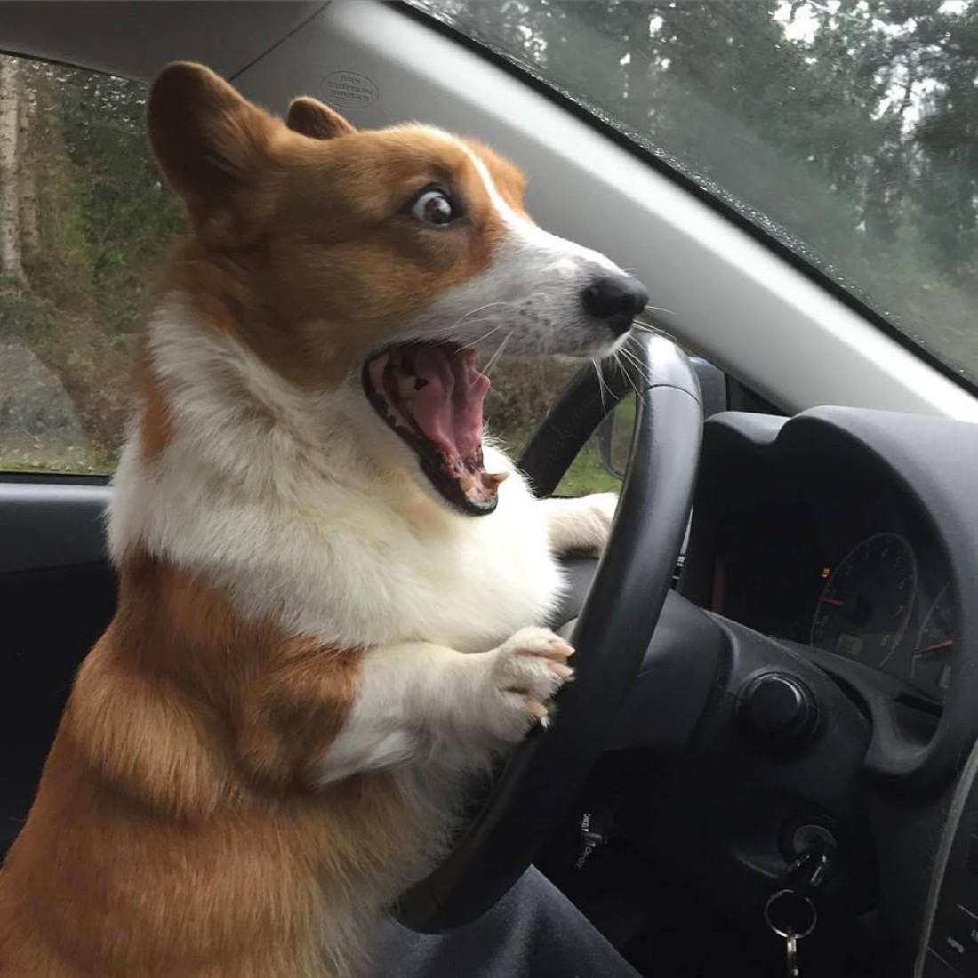 Будешь вежлив за рулем — не получишь штраф: лопатой по стеклу