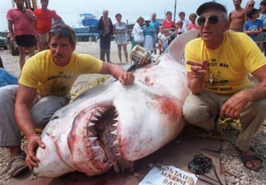 Белая акула весом 2041 килограммов
