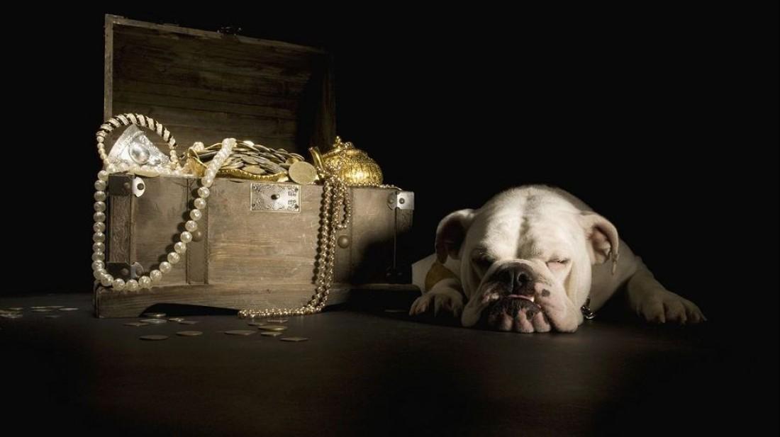 Миллионеры часто завещают свои деньги домашним животным