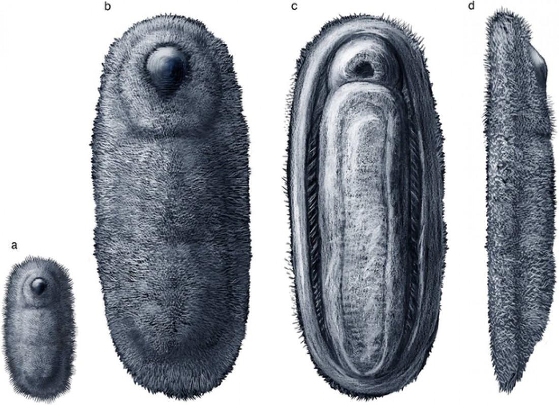 В Марокко обнаружено древнее существо возрастом 480 миллионов лет