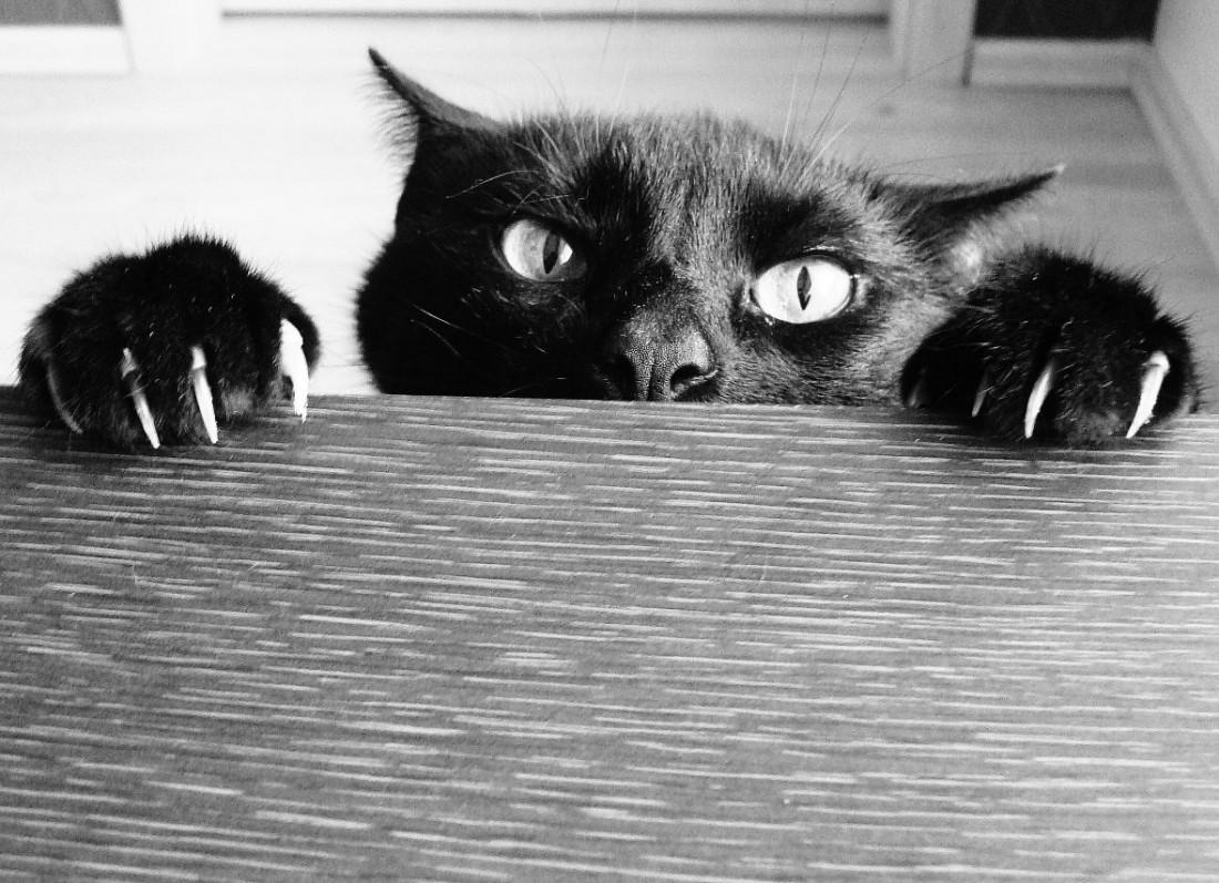 Кошка. Животное, из-за которого египтяне проиграли бой персам