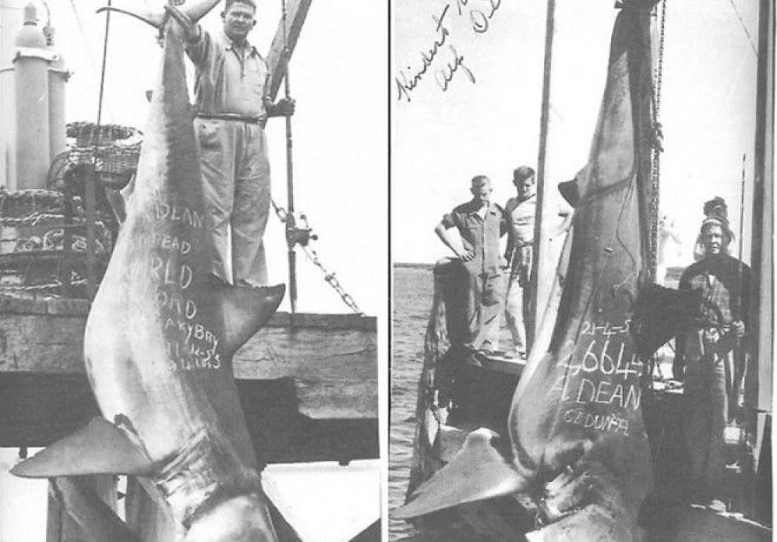 1208-килограммовая 5-метровая акула