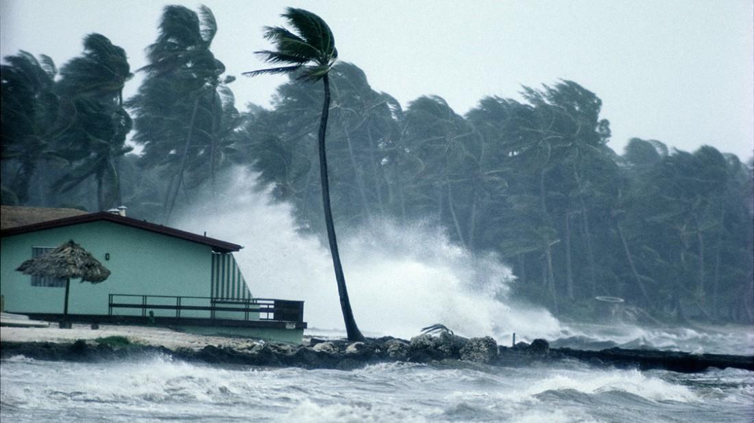 Дом и пальма, которым не повезло