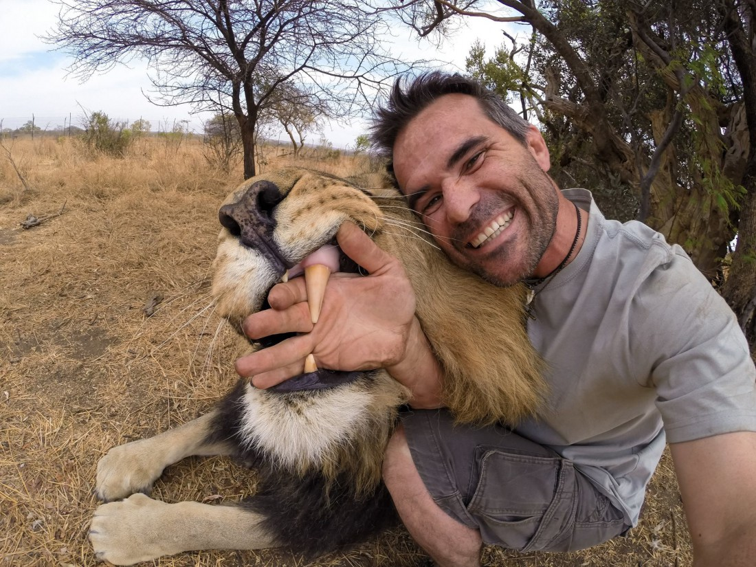 Увидел льва? Не спеши делать ноги