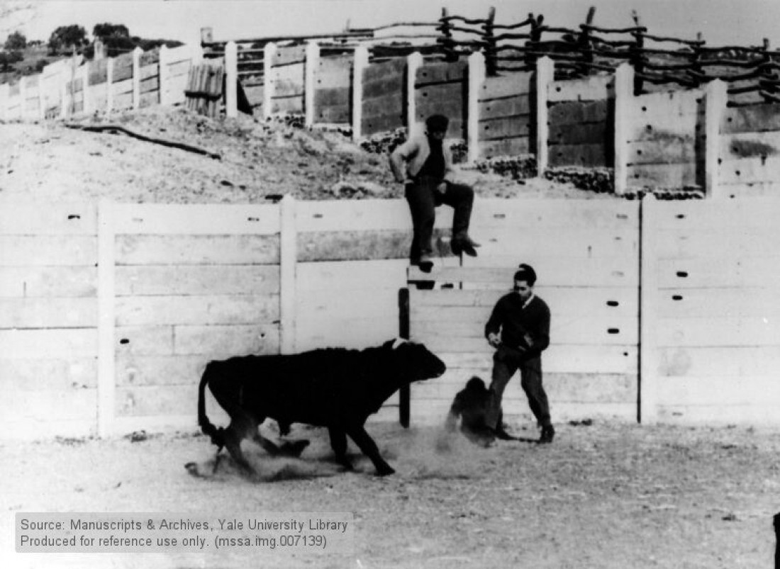 Испанский профессор Жозе Делгадо учился управлять безмозглыми животными