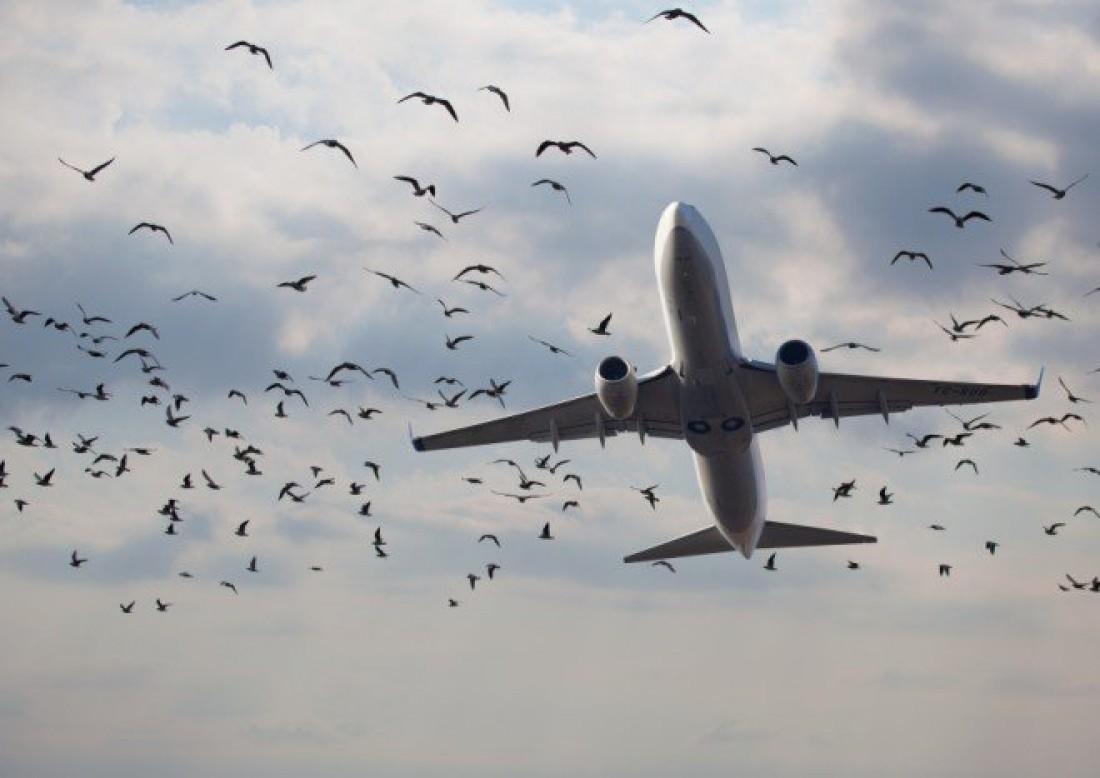 Взлетая, молись, чтобы на твоем пути не было пернатых