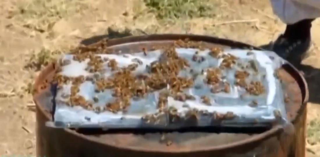 Экспериментальный сладко-липкий ноутбук и обманутые пчелы