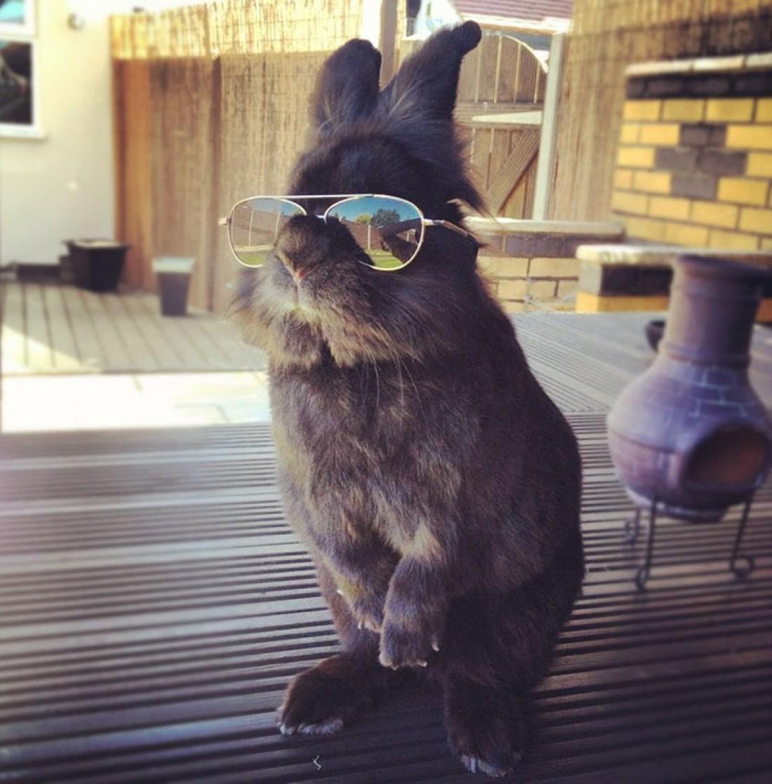 Пафосный кролик, ставший звездой интернета
