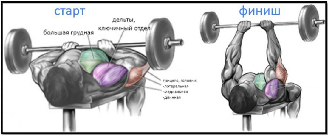 Рабочие мышцы в жиме штанги узким хватом