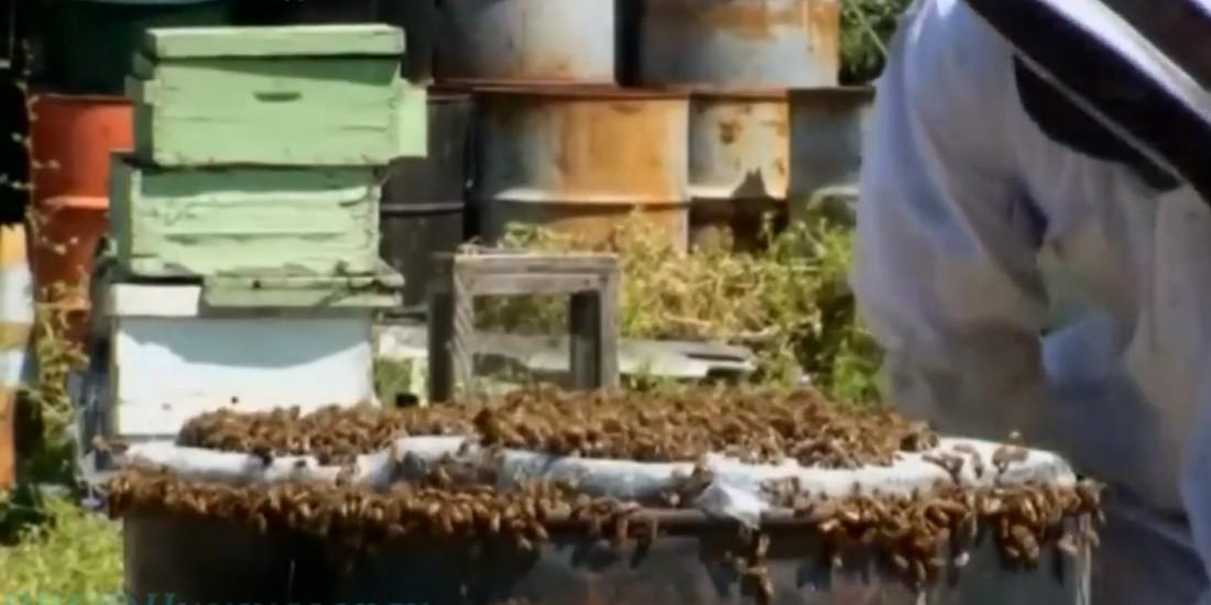 Окончательно утонувший в объятиях пчел ноутбук