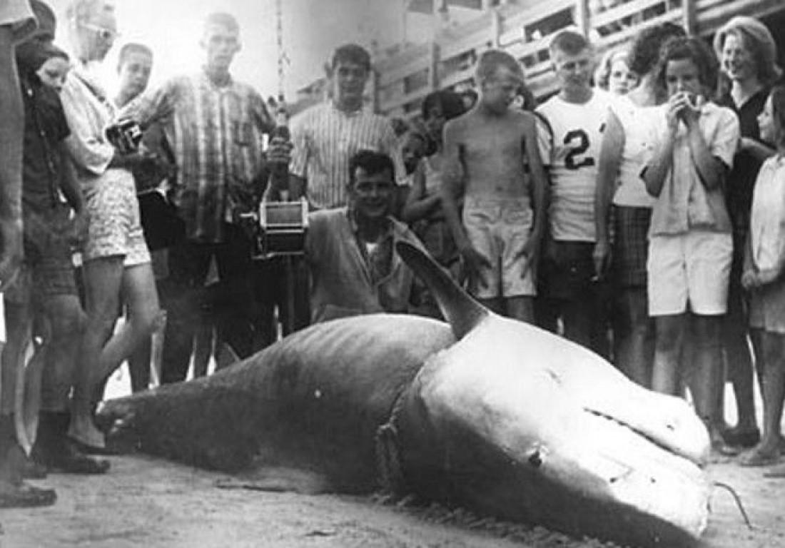 807-килограммовая тигровая акула, пойманная Вальтером Максвеллом