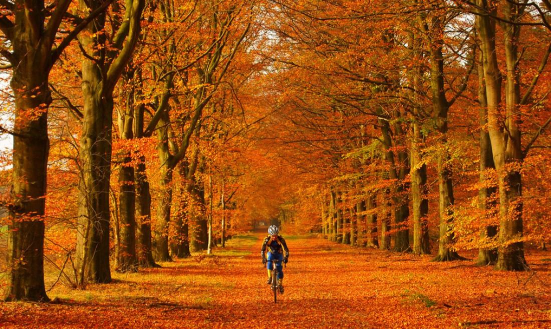 Катайся осенью в парках и лесах — там красиво