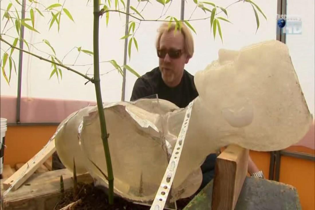 Адам. Фиксирует манекена над землей с побегами бамбука