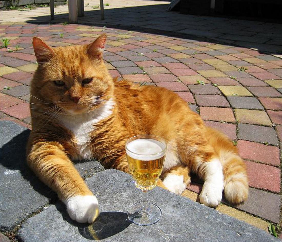 Мурзик недоволен: пиво есть, а тараньки нету
