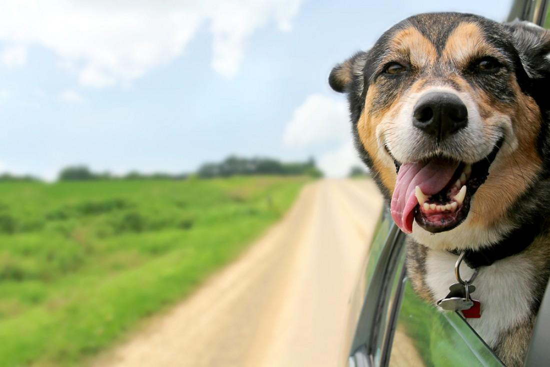 Собака — животное, которое принято считать для человека другом №1