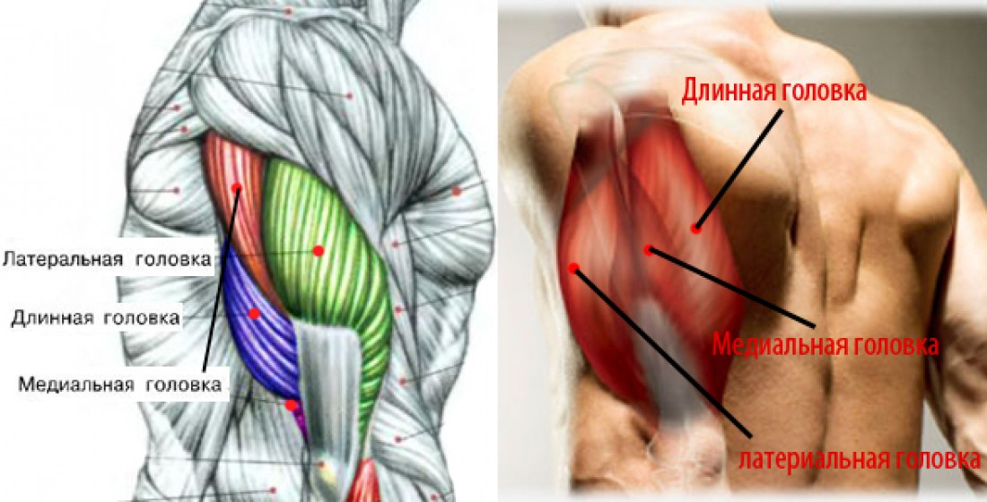 Closing thoughts about parallel bar triceps dips