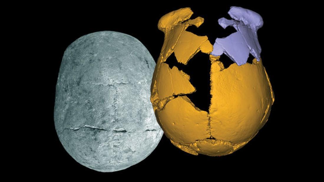 Найденные фрагменты черепа (оранжевые) и их зеркальное отражение (синие)