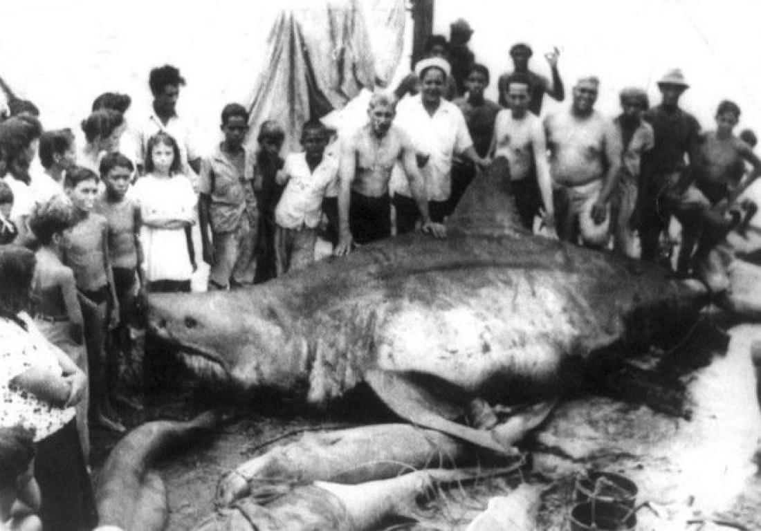 6,4-метровый монстр из Коджимар