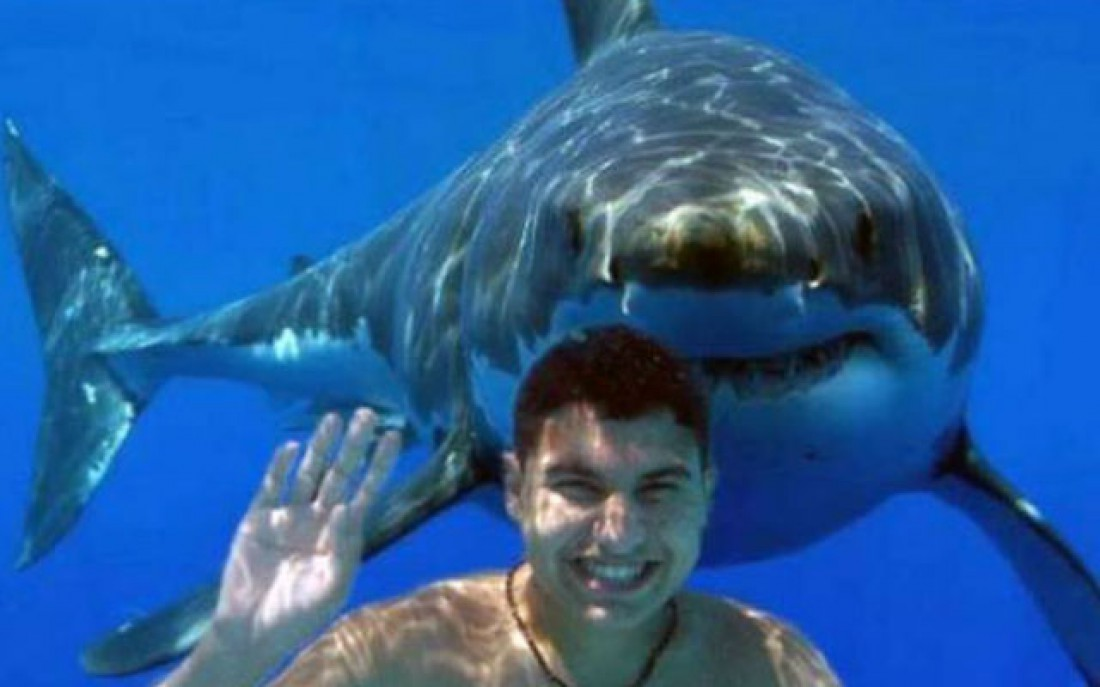 Кто сказал, что все акулы — злые и едят людей?