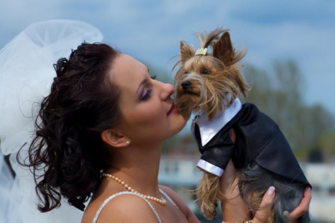 Кинопродюсер Роджер Доркас в завещании все свои $65 миллионов оставил любимому псу Максимилиану