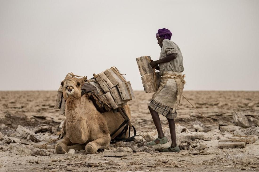 Добытчики соли в Эфиопии постоянно пашут в жаре не ниже +50 °C
