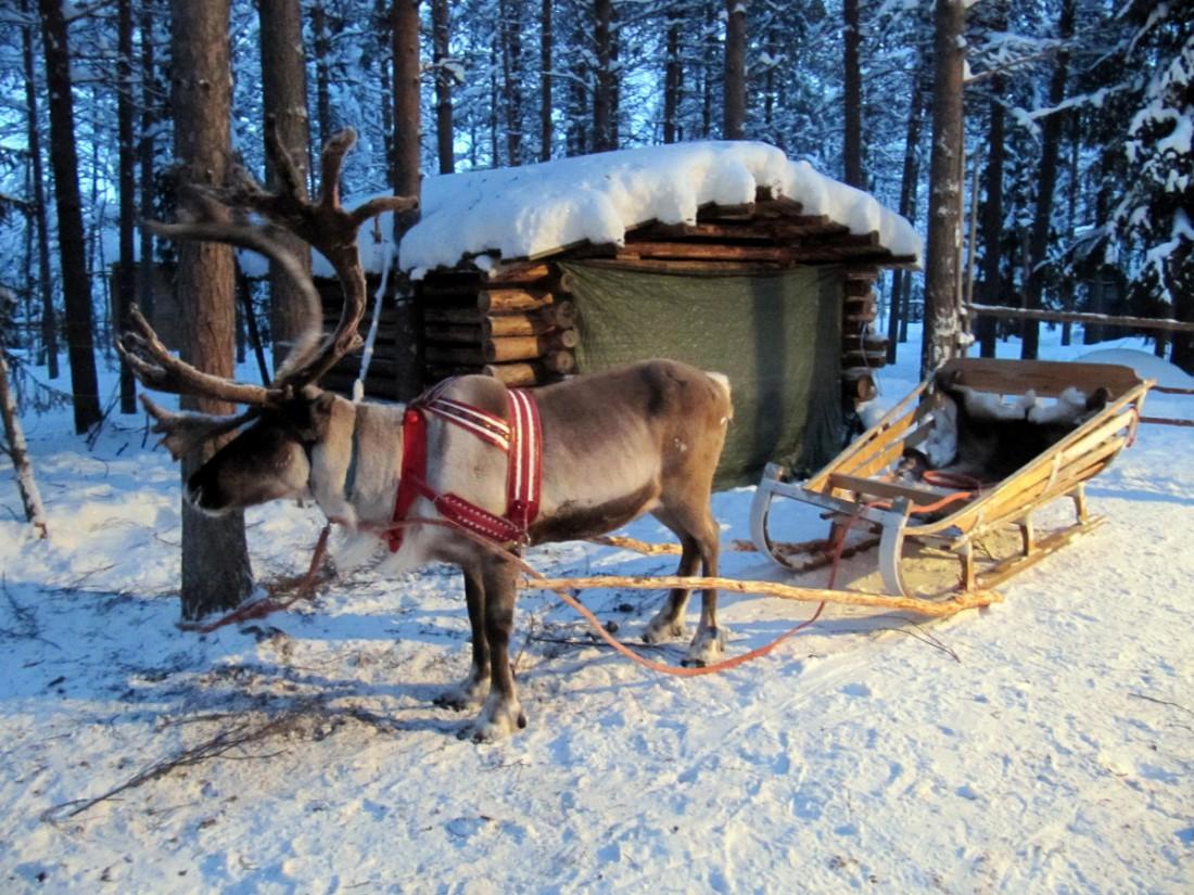В Финляндии полно рождественских персонажей - оленей