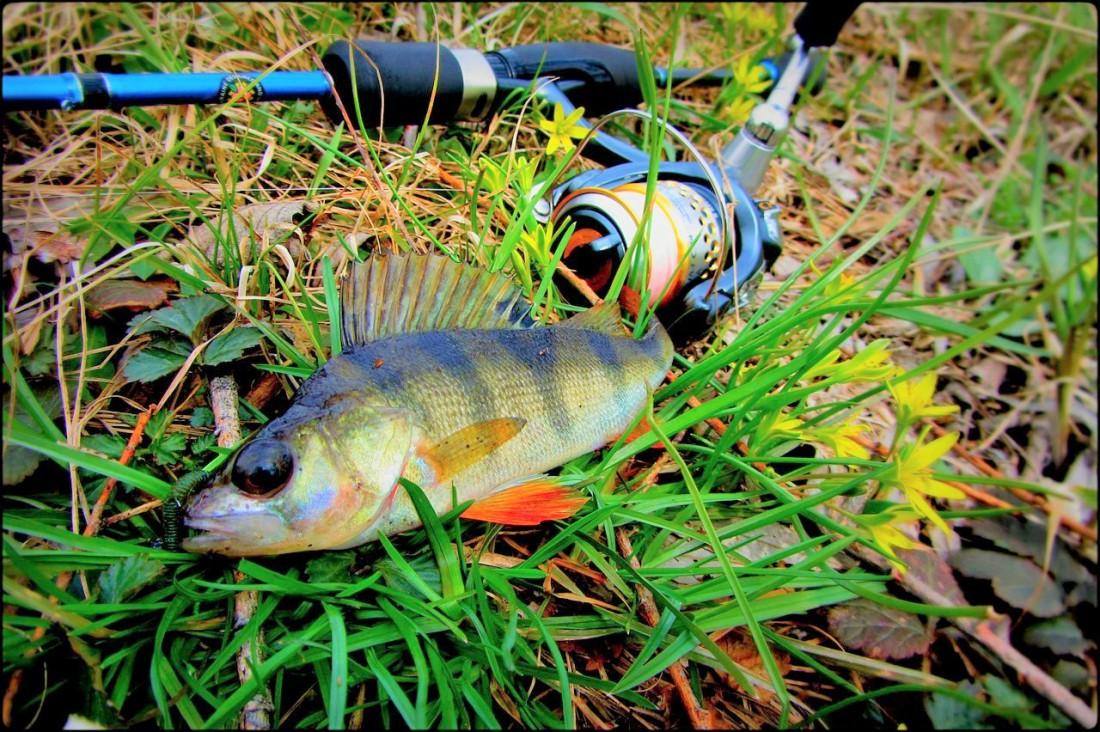 Холода - не проблема для рыбака, знающего, как ловить окуня осенью