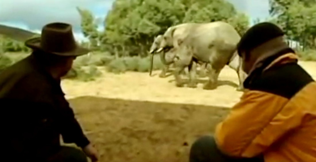 Адам (слева) и Джейми наблюдают за слонами