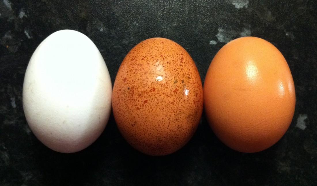 Яйца содержат ниацин, помогающий сжигать жир