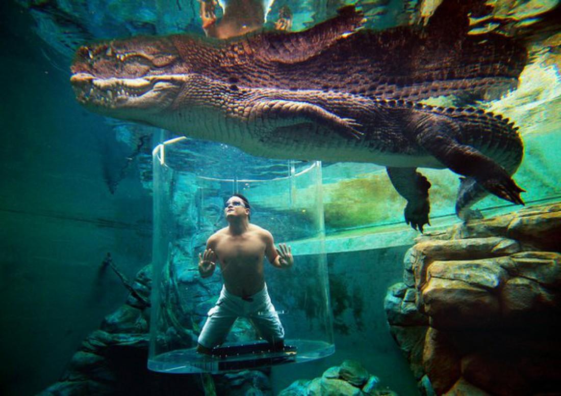 А тебе слабо сходить на свидание к крокодилам в такой клетке?