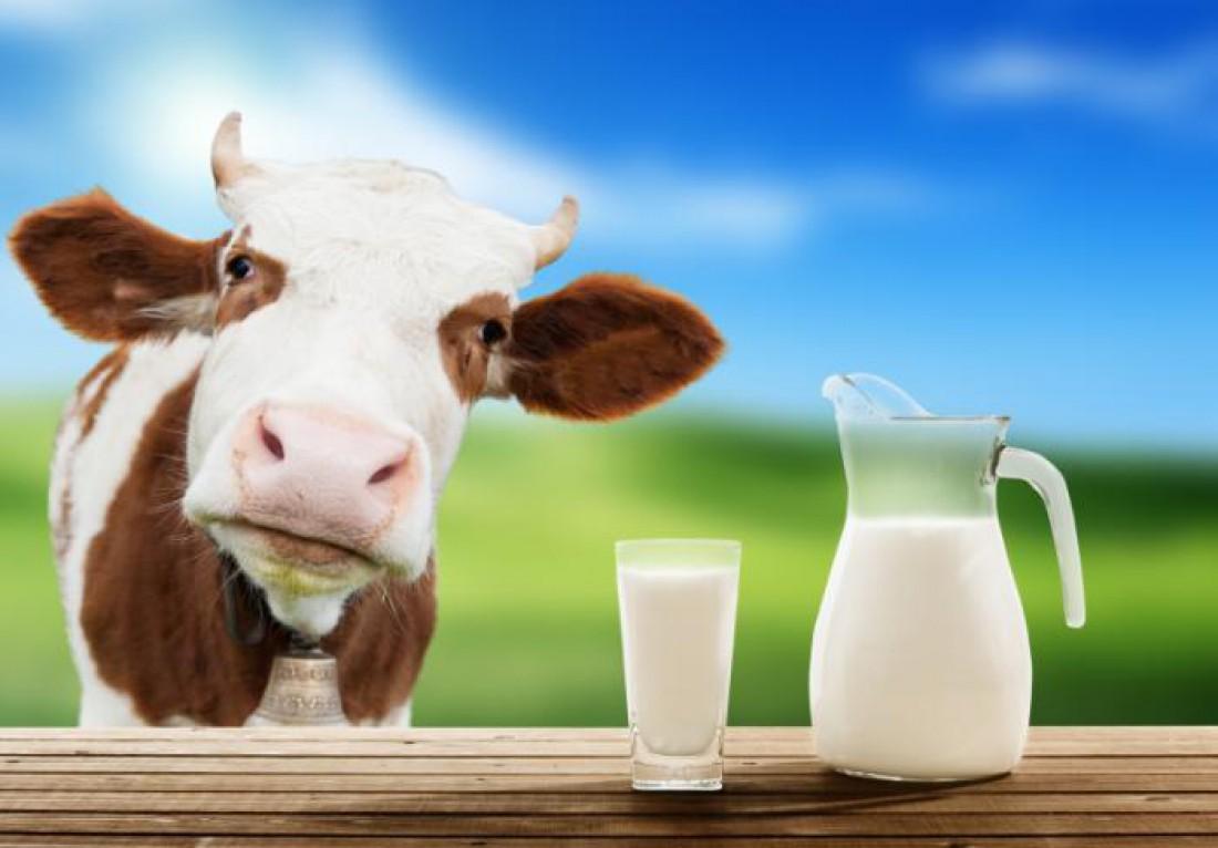 Молоко и молокопродукты — богатый источник холина