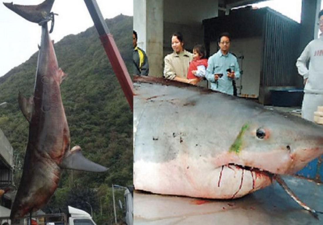 Этого гиганта час не могли угомонить 10 тайваньских рыбаков