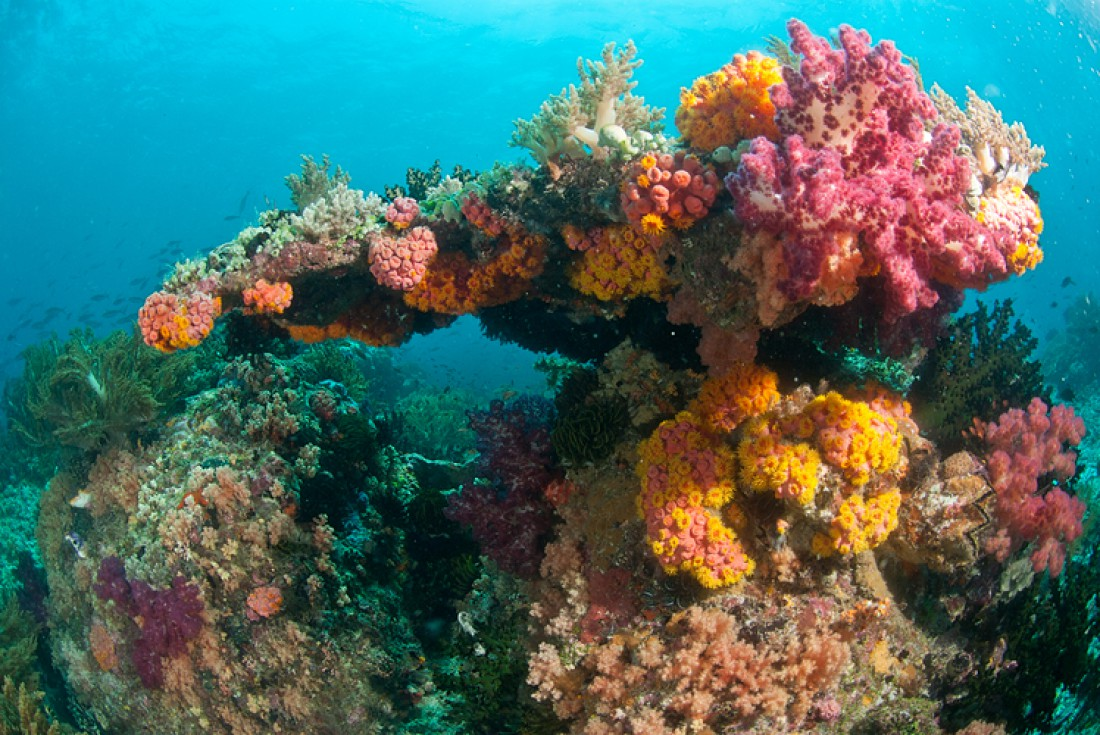 Океаническая прелесть, которая умирает