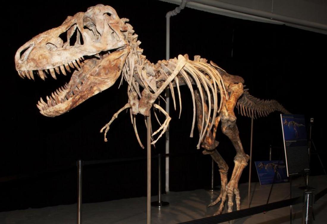 70-миллионно-летний динозавр