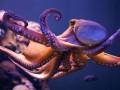Ученые доказали внеземное происхождение осьминогов