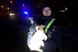 Собака и полицейский