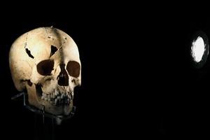 Антропологии изучили 1500 черепов белых американцев