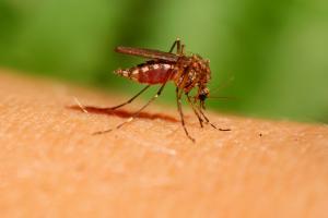 Самое безобидное, что может укусить тебя в тропиках – это москит