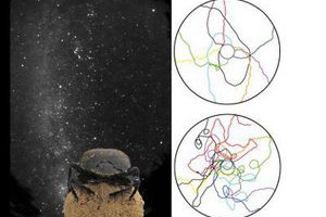 Треки скарабеев при наличии (вверху) и отсутствии света Млечного пути