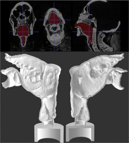 Воссозданный голосовой тракт мумии