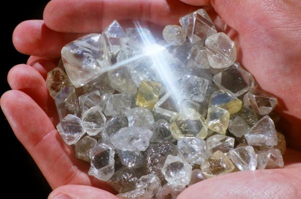 Алмазы можно найти при помощи растения