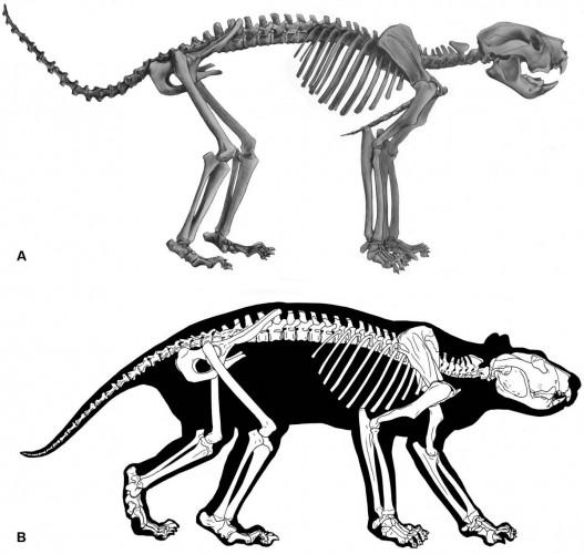Реконструкция скелетеа