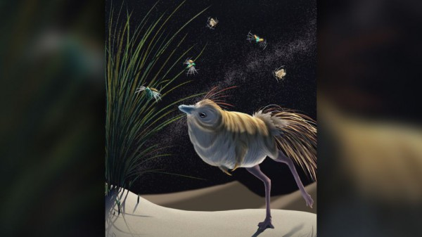 Shuvuuia deserti, возможно, охотились на ночных пустынных насекомых