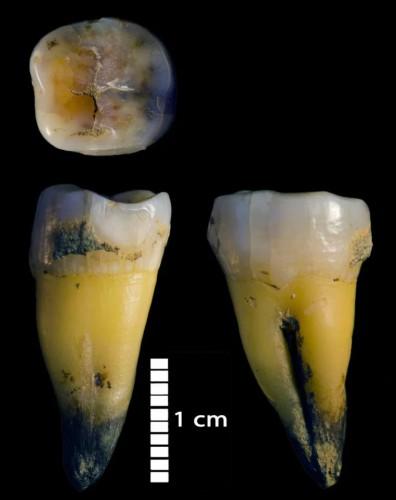Современные коренные зубы человека найдены в пещере Бачо Киро в Болгарии