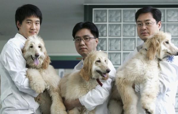 В Китае будут массово клонировать животных