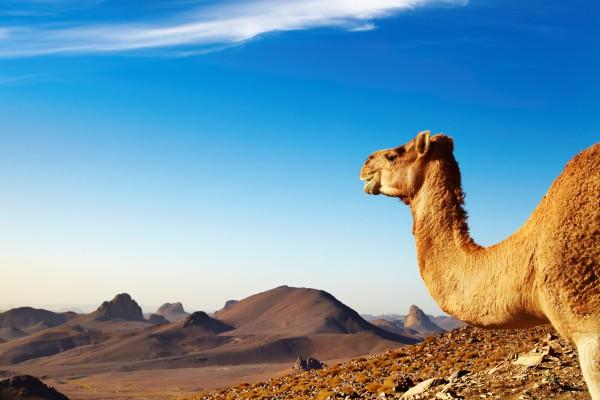 Как отдохнуть в Алжире хорошо
