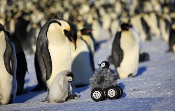 Пингвины осматривают робота-шпиона